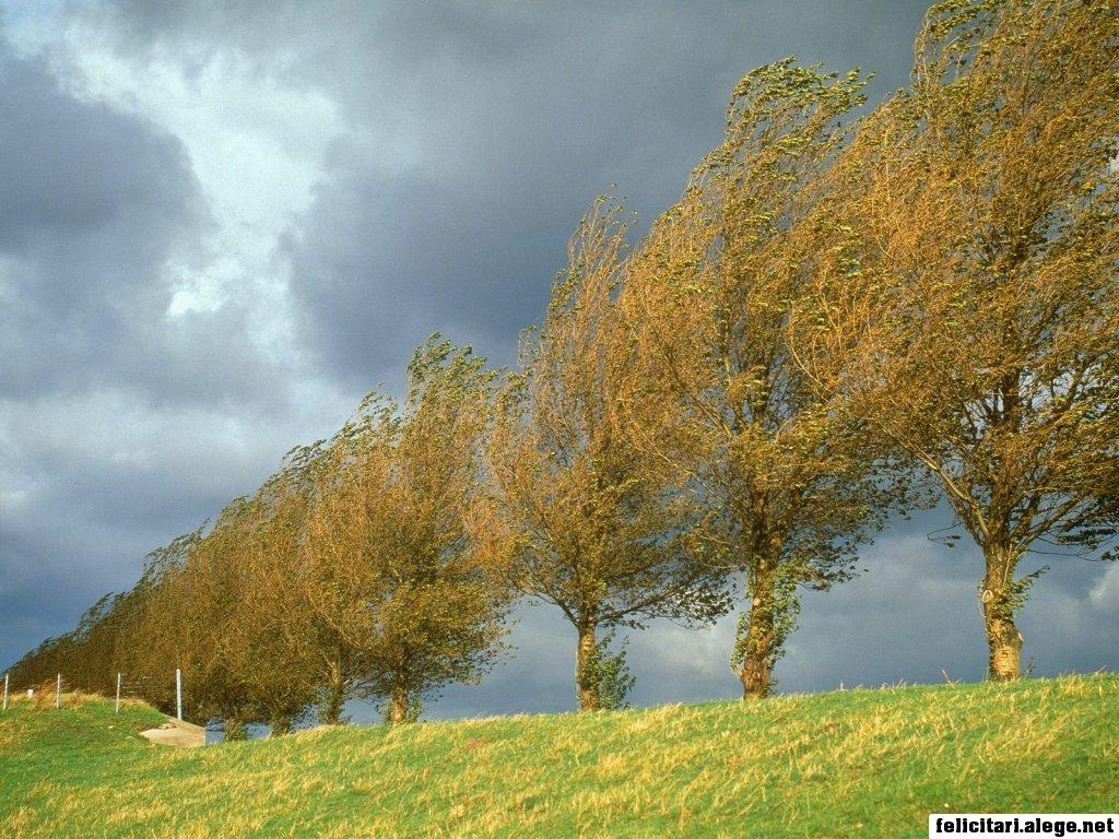 Poplars Holland The Netherlands