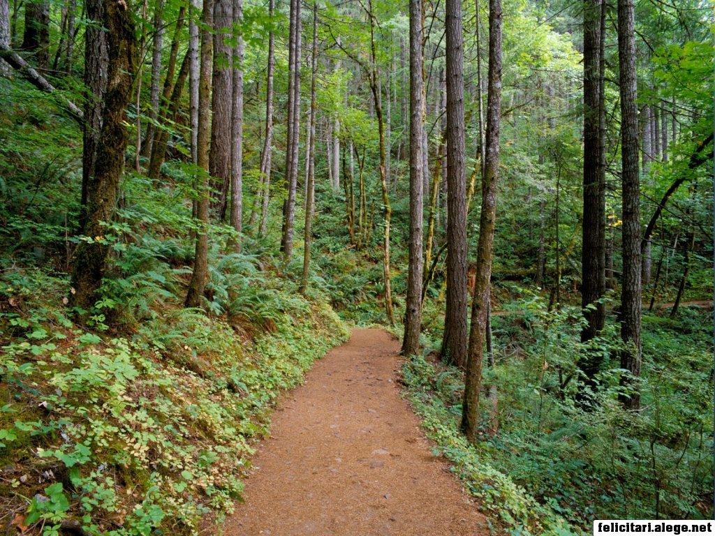Quiet Trail Columbia River Gorge Oregon