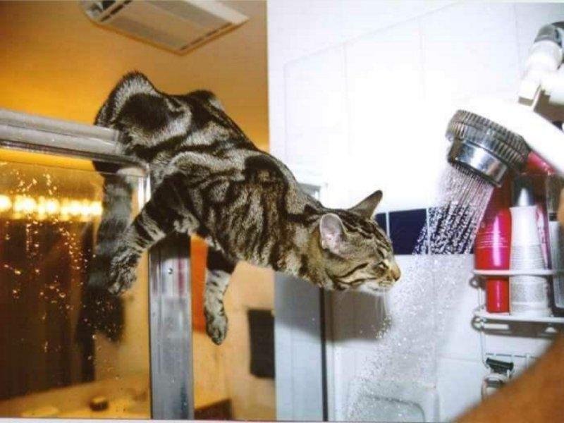 Cats & Kittens 01