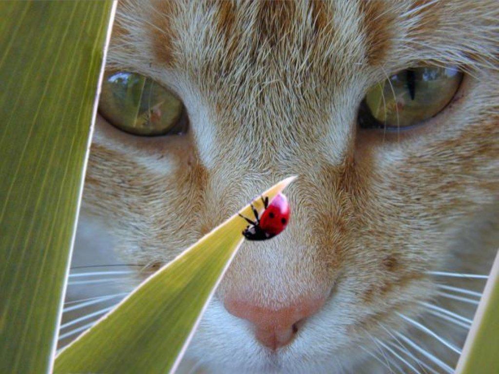 Pisici 09