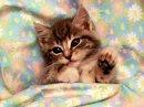 Cats & Kittens 13