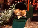 Cats & Kittens 27